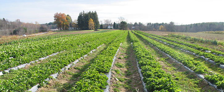 Row Crops in Central Massachusetts <small><em>(photo courtesy of USDA NRCS)</em></small>